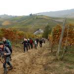 Tra vigne e filari